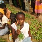 Karotten aus dem Schulgarten in Burkina Faso