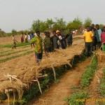 Mit den Rahmenbedingungen vor Ort Gemüse im Schulgarten anbauen