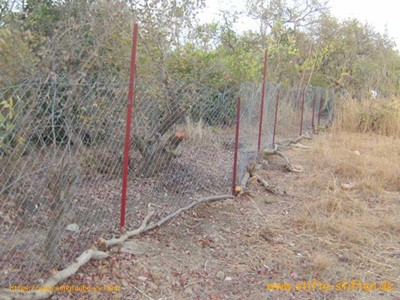 Der Zaun schützt den Garten vor Tieren
